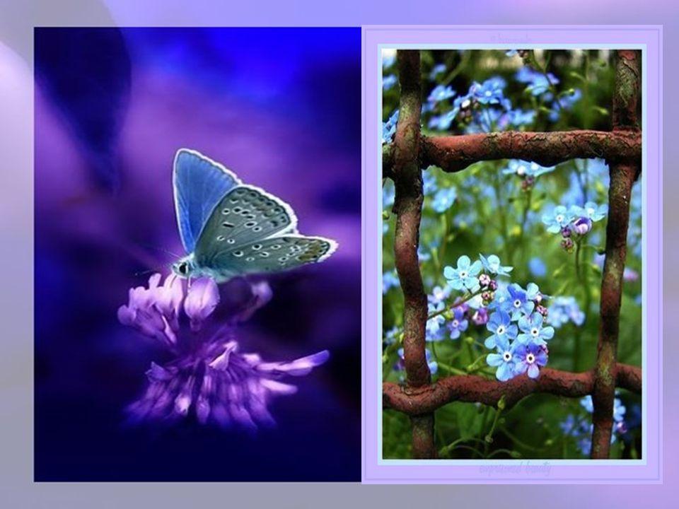 Jour et nuit notre petit papillon est toujours heureux de sa vie même passagère.
