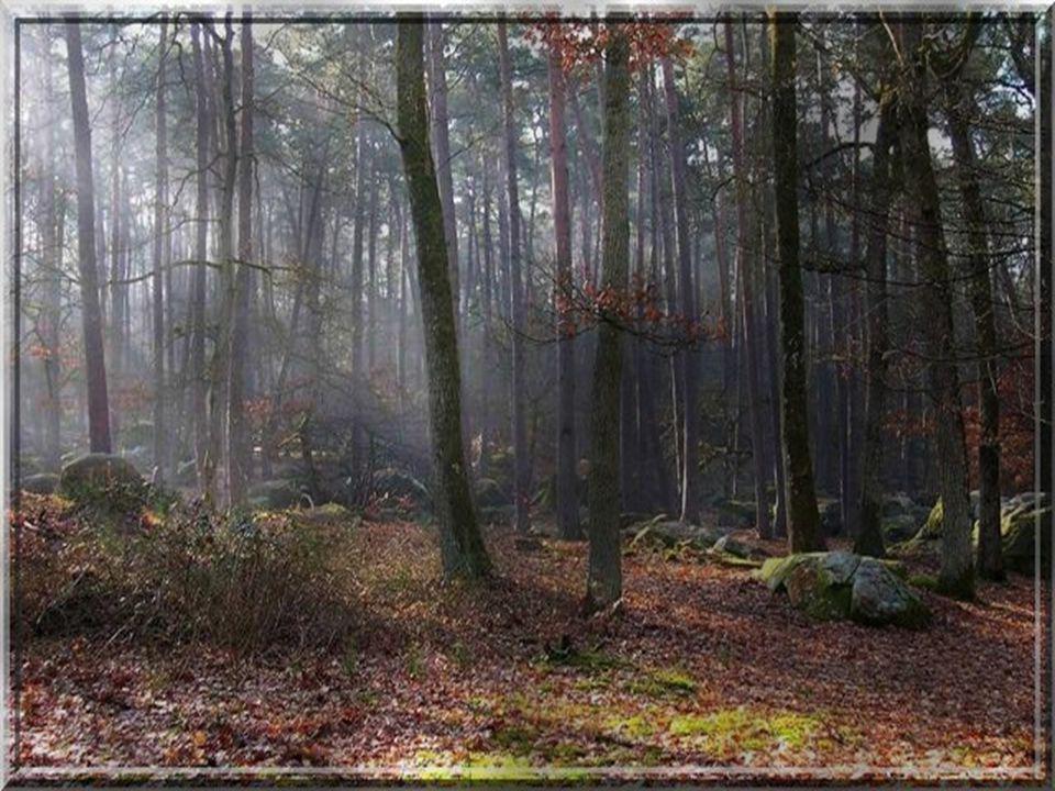 Une odeur de résine venant des pins agrestes Le vent dans les feuillages crée des danses macabres Et les oiseaux de nuit envoient leur chant funeste