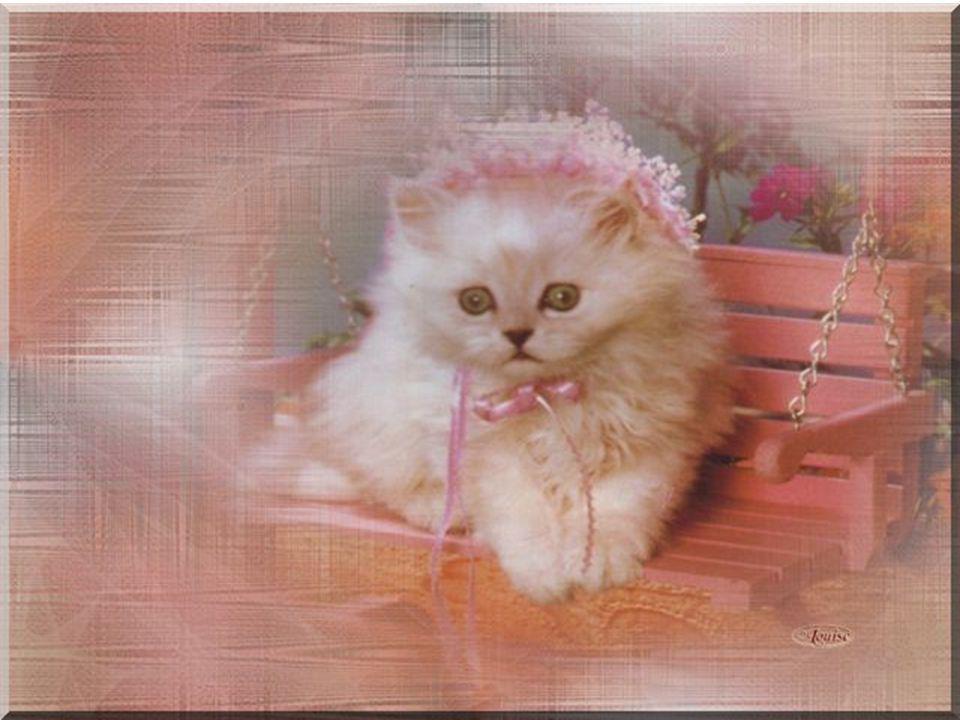 Je vois avec étonnement Le feu de ses prunelles pâles, Clairs fanaux, vivantes opales, Qui me contemplent fixement.