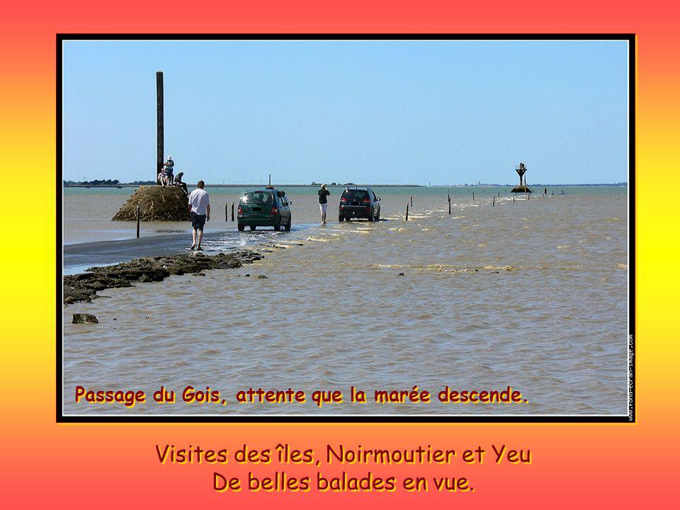 La Vendée altitude maxi 56 MTS.
