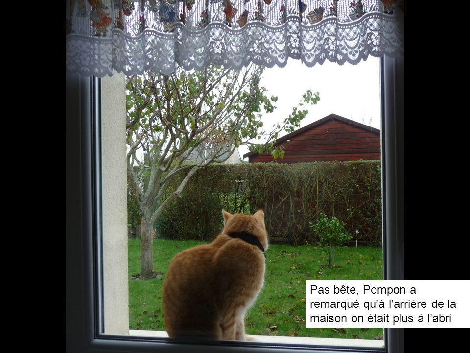 Pas bête, Pompon a remarqué quà larrière de la maison on était plus à labri