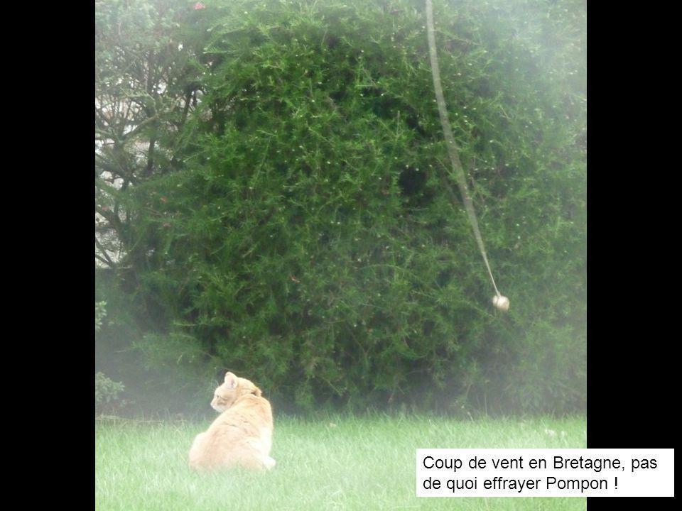 Coup de vent en Bretagne, pas de quoi effrayer Pompon !