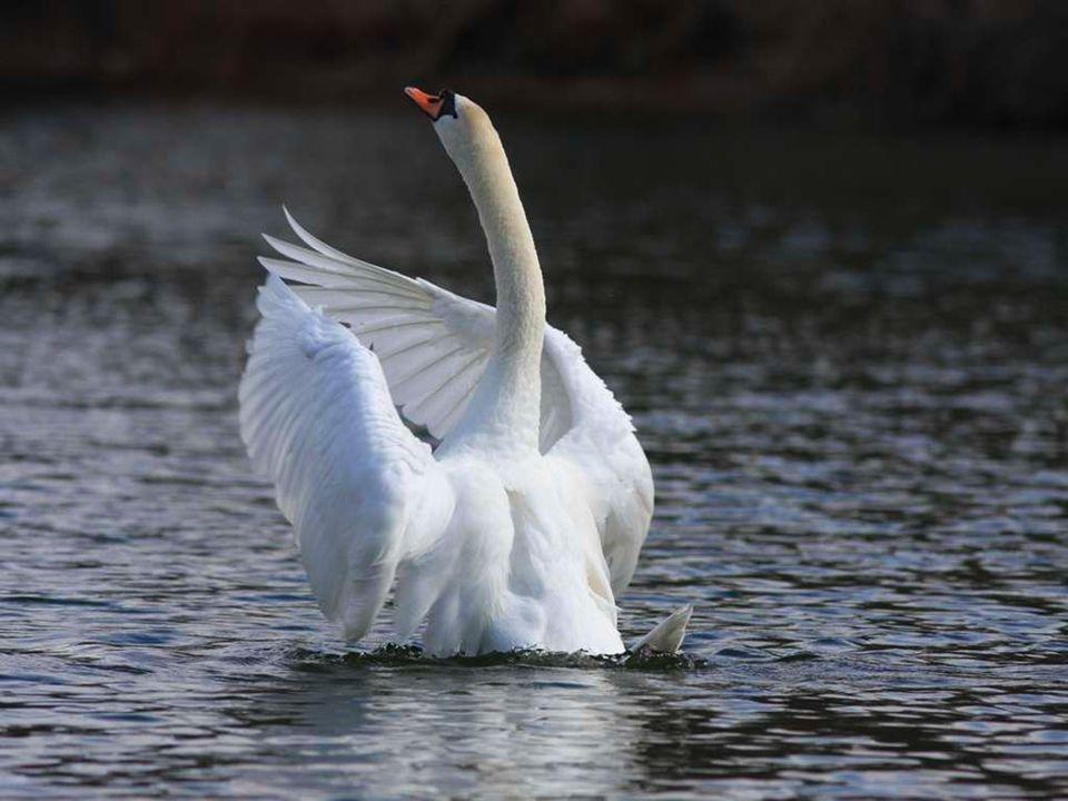 Enfin si tu insiste juste une Salut et Bonne Année et a bientôt aux étangs dingersheim