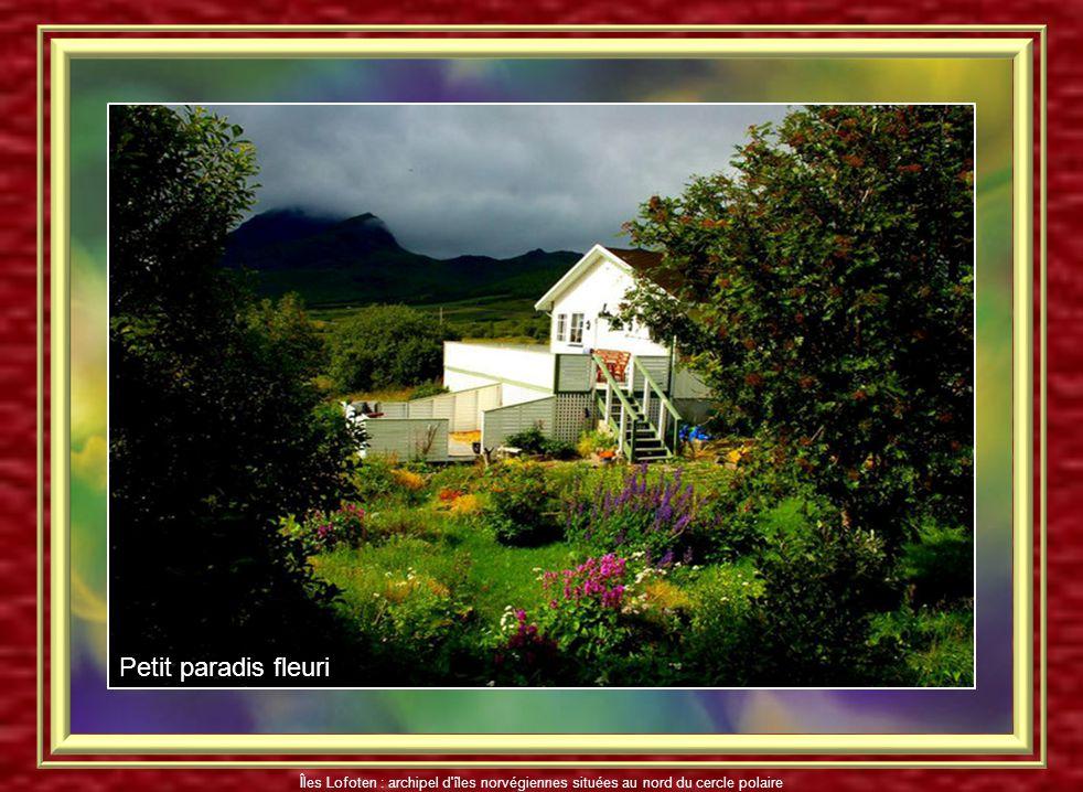 Petit paradis fleuri Îles Lofoten : archipel d îles norvégiennes situées au nord du cercle polaire