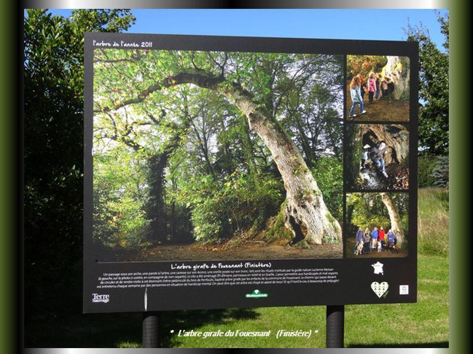 « LArbre de lannée 2011 » Le premier concours de lArbre de lannée a été organisé en France par le magazine Terre Sauvage et lOffice National des Forêt
