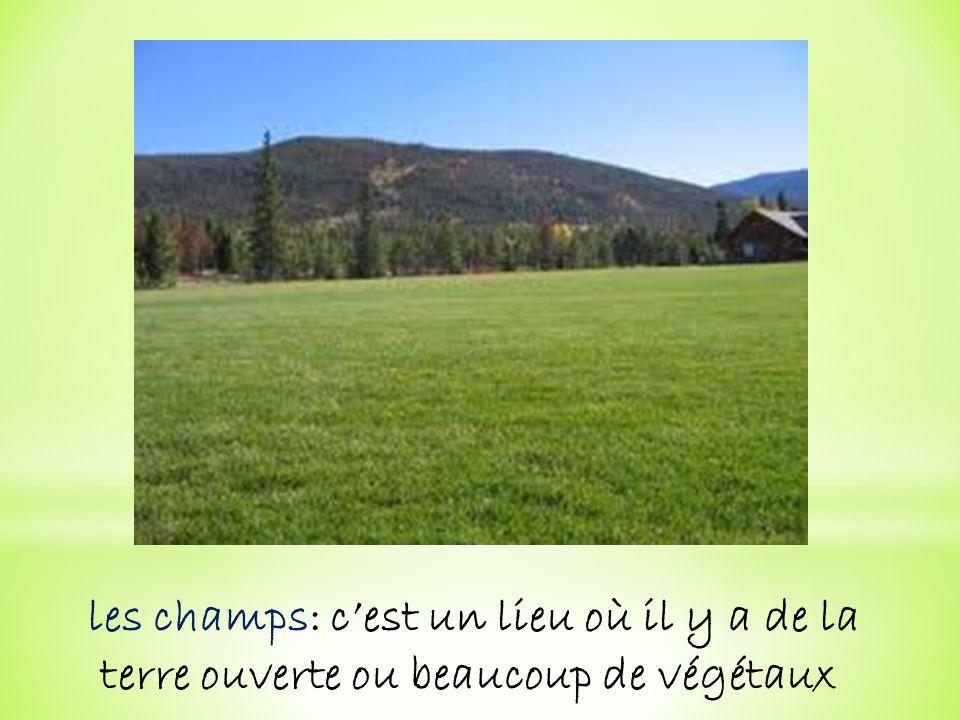 les champs: cest un lieu où il y a de la terre ouverte ou beaucoup de végétaux
