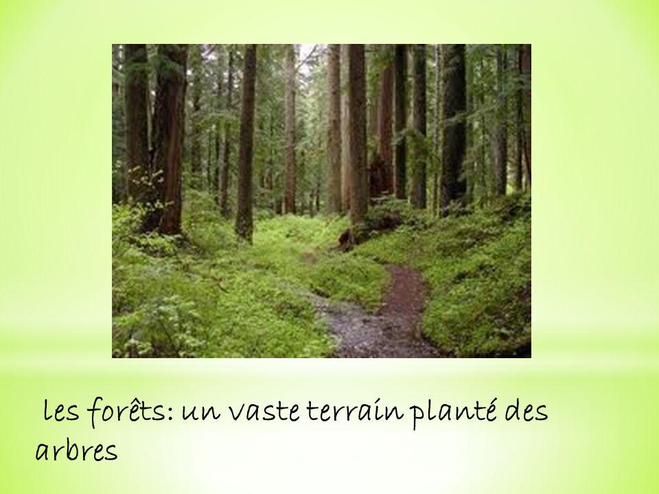 les forêts: un vaste terrain planté des arbres