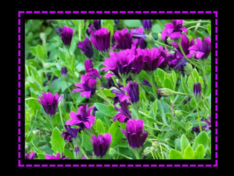 Voici le Printemps, aux fleurs demi closes La brise qui vient des bois rajeunis Murmure tout bas de divines choses...