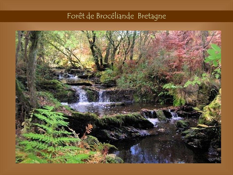 Forêt Bibracte Morvan