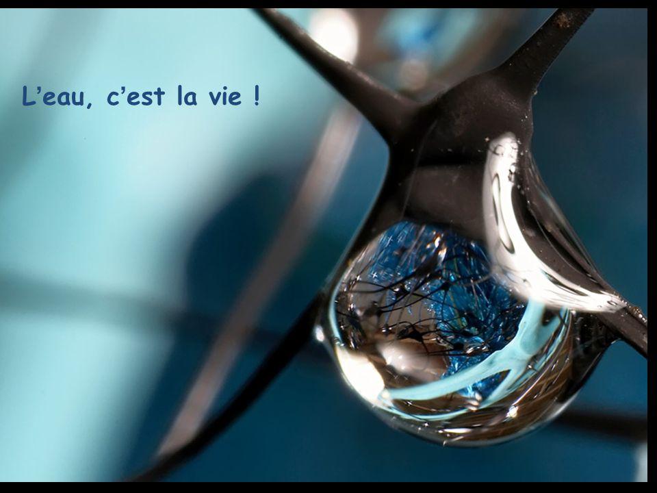 L eau, c est la vie !