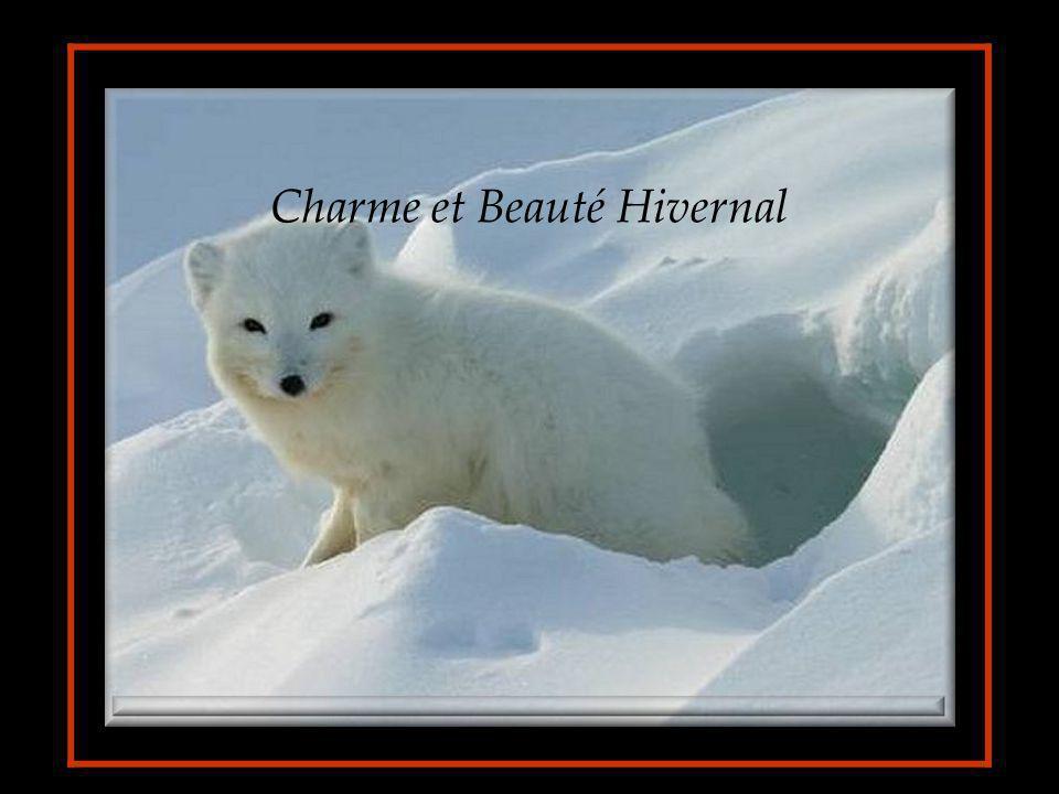 Charme et Beauté Hivernal
