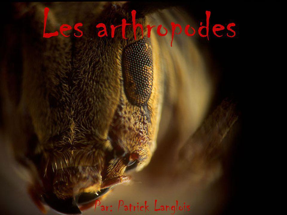 Les arthropodes arthropode (nom masculin) Terme désignant les animaux invertébrés possédant un squelette externe et des appendices articulés, comme les crustacés, les insectes ou les araignées.