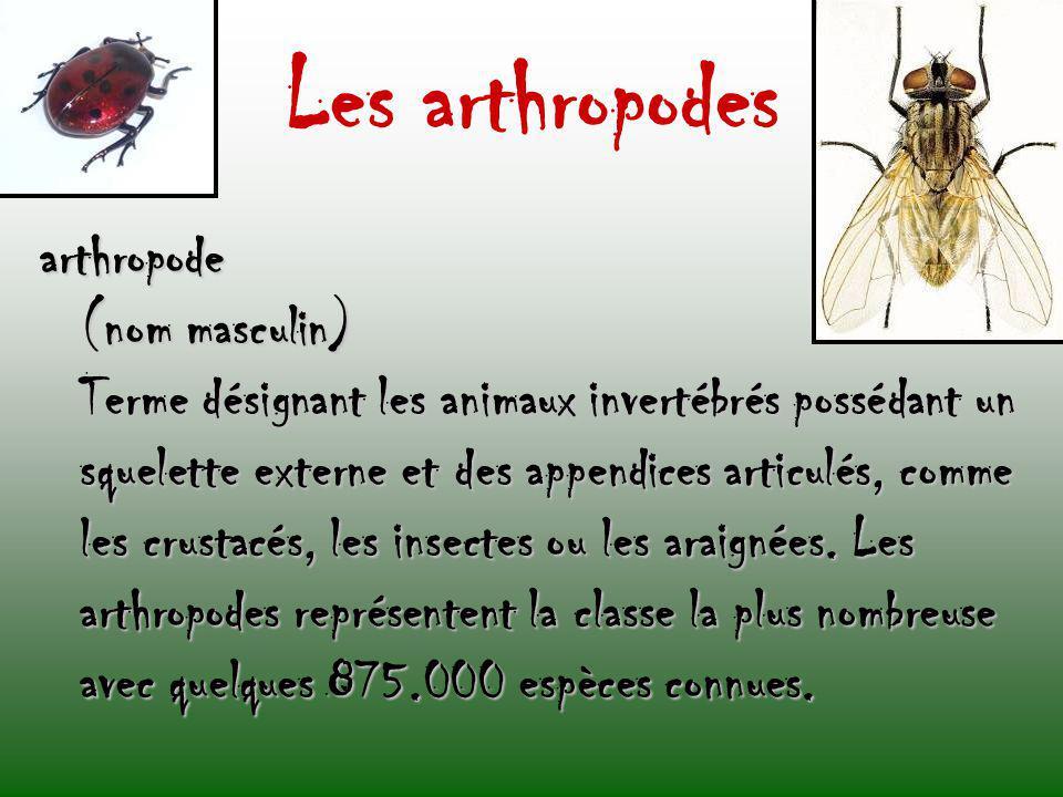 Les arthropodes arthropode (nom masculin) Terme désignant les animaux invertébrés possédant un squelette externe et des appendices articulés, comme le