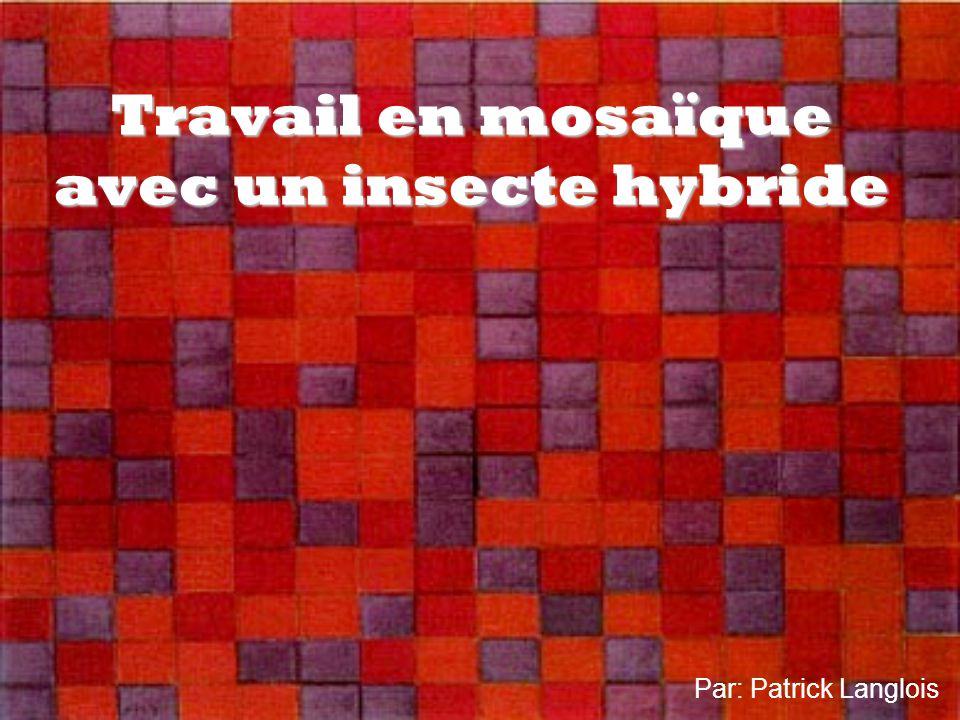 Travail en mosaïque avec un insecte hybride Par: Patrick Langlois