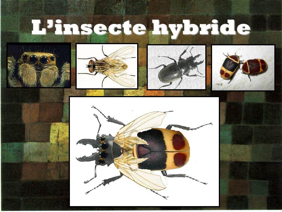 Linsecte hybride