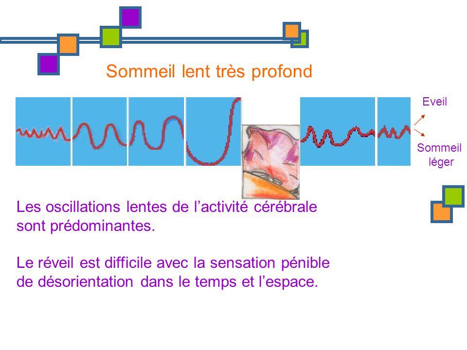 Eveil Sommeil léger Sommeil lent très profond Les oscillations lentes de lactivité cérébrale sont prédominantes. Le réveil est difficile avec la sensa