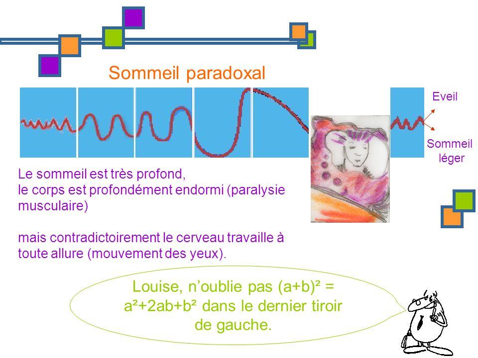 Eveil Sommeil léger Sommeil paradoxal Le sommeil est très profond, le corps est profondément endormi (paralysie musculaire) mais contradictoirement le