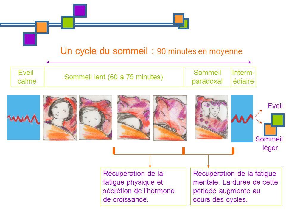 Eveil calme Sommeil lent (60 à 75 minutes) Sommeil paradoxal Interm- édiaire Un cycle du sommeil : 90 minutes en moyenne Récupération de la fatigue ph