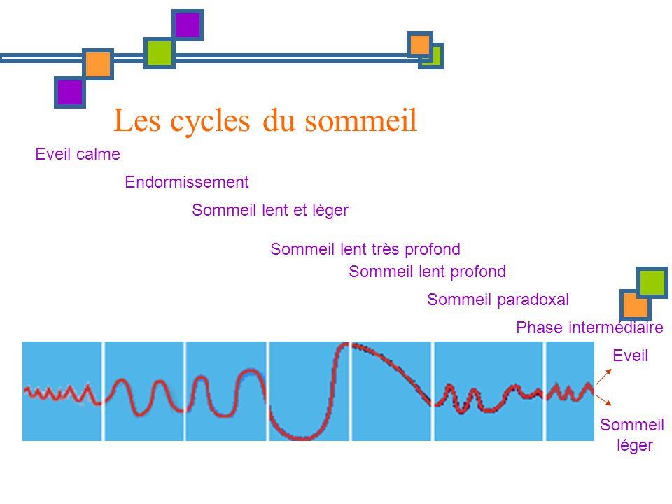 Eveil Sommeil léger Eveil calme Endormissement Sommeil lent et léger Sommeil lent très profond Sommeil paradoxal Phase intermédiaire Sommeil lent prof