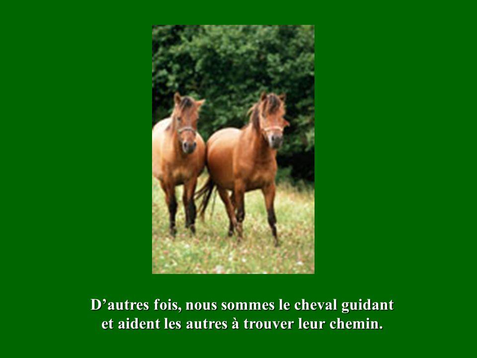 Des fois, nous sommes le cheval aveugle, guidé par la clochette des personnes que la vie a mises dans notre vie.