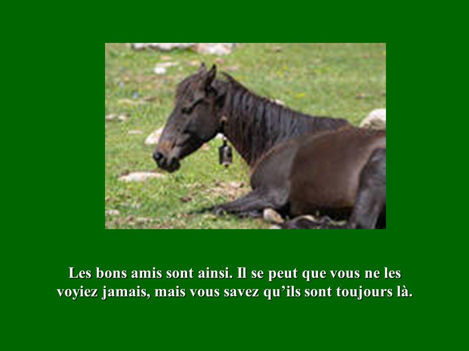 Dautres fois, nous sommes le cheval guidant et aident les autres à trouver leur chemin.