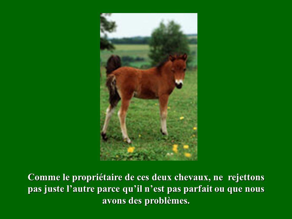 Comme le propriétaire de ces deux chevaux, ne rejettons pas juste lautre parce quil nest pas parfait ou que nous avons des problèmes.
