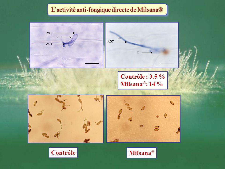 Lactivité anti-fongique directe de Milsana® AGT PGT C C AGT Contrôle : 3.5 % Milsana ® : 14 % Contrôle Milsana ®