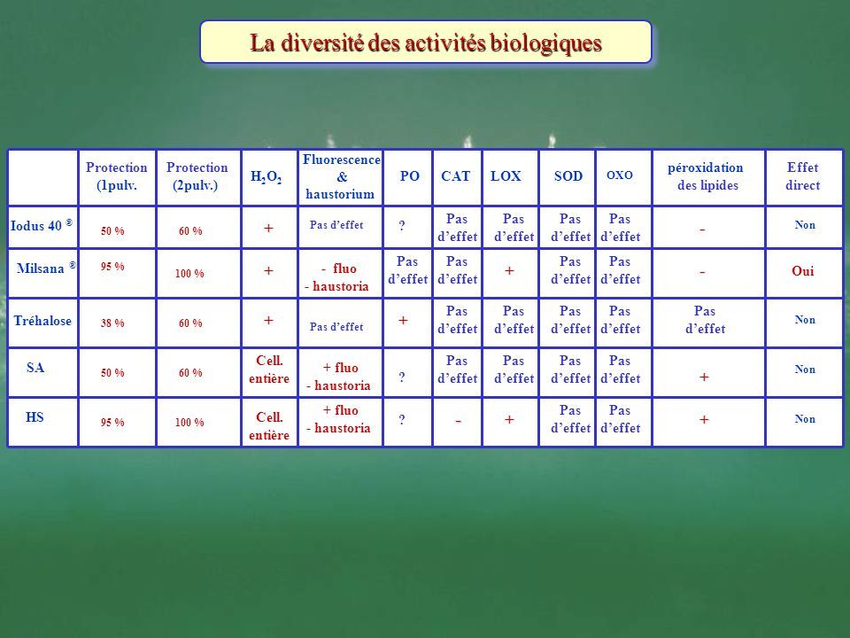 La diversité des activités biologiques Protection (1pulv. Protection (2pulv.) H2O2H2O2 Fluorescence & haustorium POCATLOXSOD OXO péroxidation des lipi