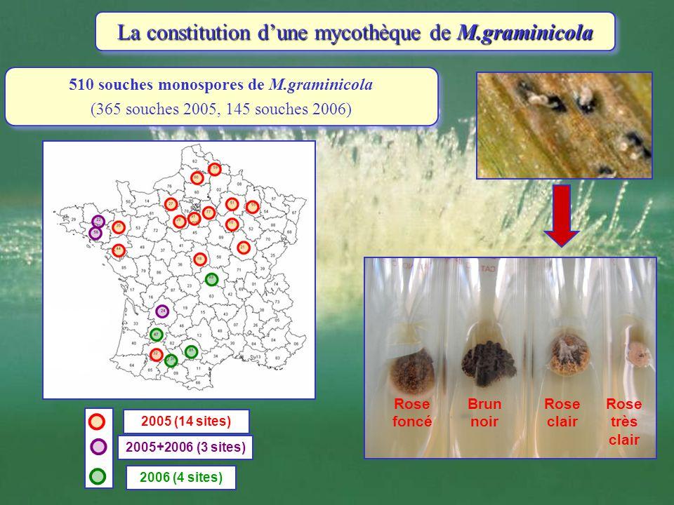 2005 (14 sites) 2005+2006 (3 sites) 2006 (4 sites) 510 souches monospores de M.graminicola (365 souches 2005, 145 souches 2006) 510 souches monospores
