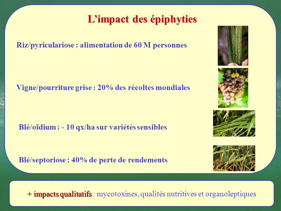 Limpact des épiphyties Blé/oïdium : - 10 qx/ha sur variétés sensibles Blé/septoriose : 40% de perte de rendements Riz/pyriculariose : alimentation de