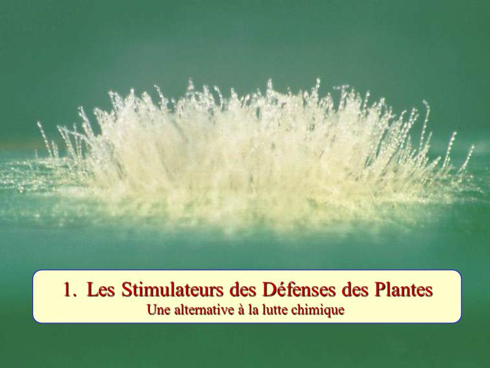 Le concept : Des oligosaccharides pariétaux possèdent des activités régulatrices des défenses des plantes (Peter Albersheim & Alan Darvill, 1983, Complex Carbohydrate Research Center, Athens, USA) CellulevégétalePAROI Pectine (PGA) CellulefongiquePAROIChitine Chitinases Oligogalacturonates (OGAs) DAMPs OligochitinesPAMPs Stimulation des défenses Polygalacturonases