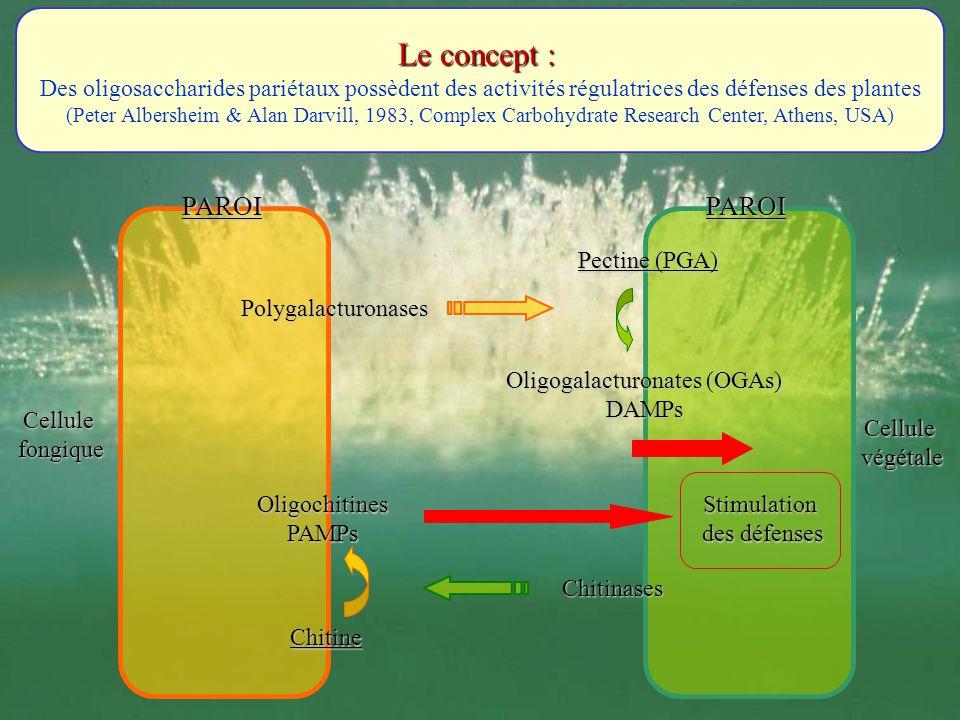 Le concept : Des oligosaccharides pariétaux possèdent des activités régulatrices des défenses des plantes (Peter Albersheim & Alan Darvill, 1983, Comp