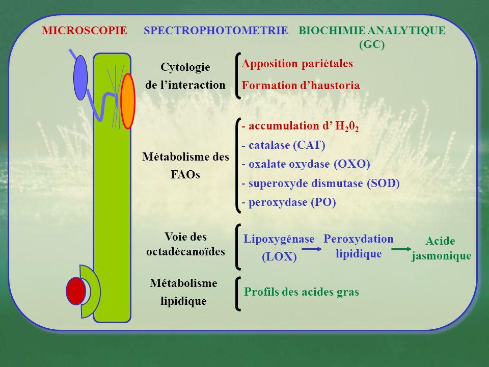 *** * Les activités biologiques des SDP