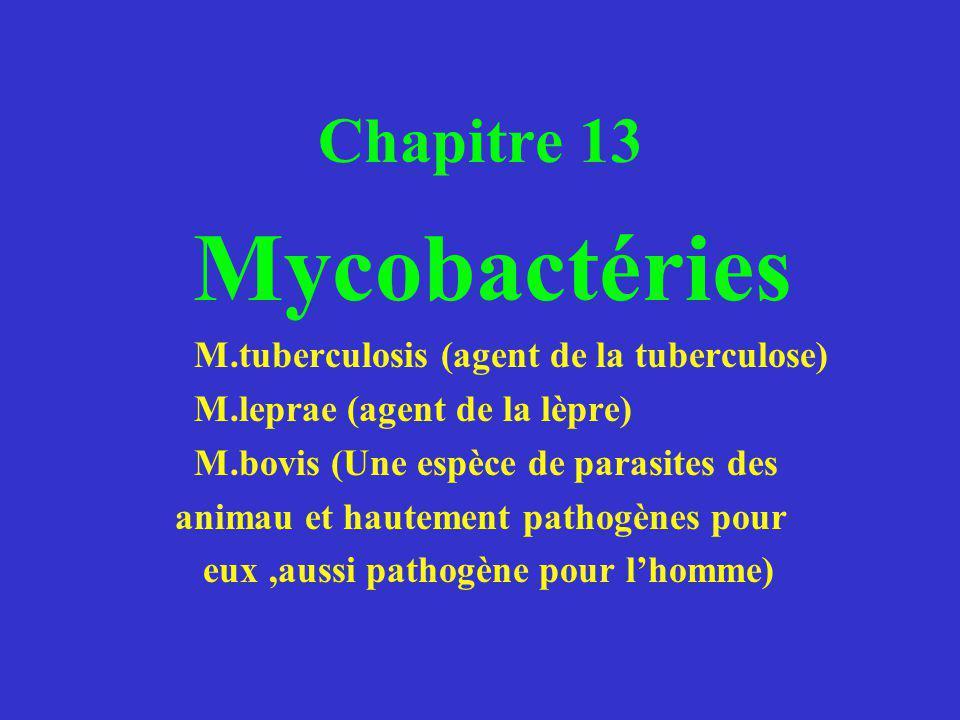 Chapitre 13 Mycobactéries M.tuberculosis (agent de la tuberculose) M.leprae (agent de la lèpre) M.bovis (Une espèce de parasites des animau et hautement pathogènes pour eux,aussi pathogène pour lhomme)
