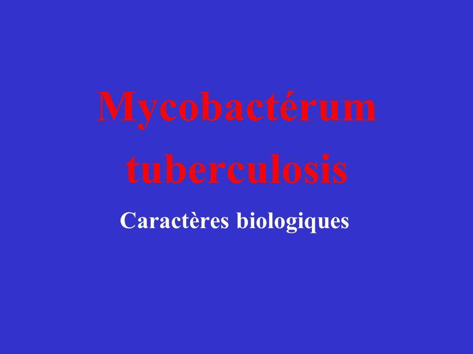 Mycobactérum tuberculosis Caractères biologiques