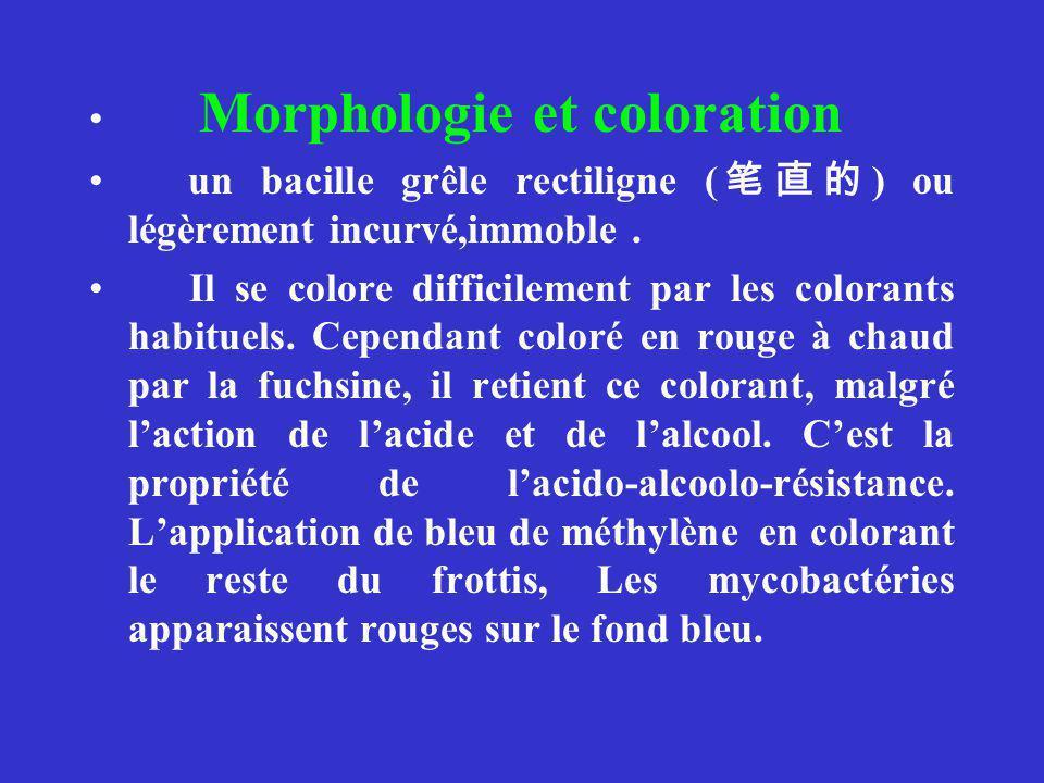 Morphologie et coloration un bacille grêle rectiligne ( ) ou légèrement incurvé,immoble.