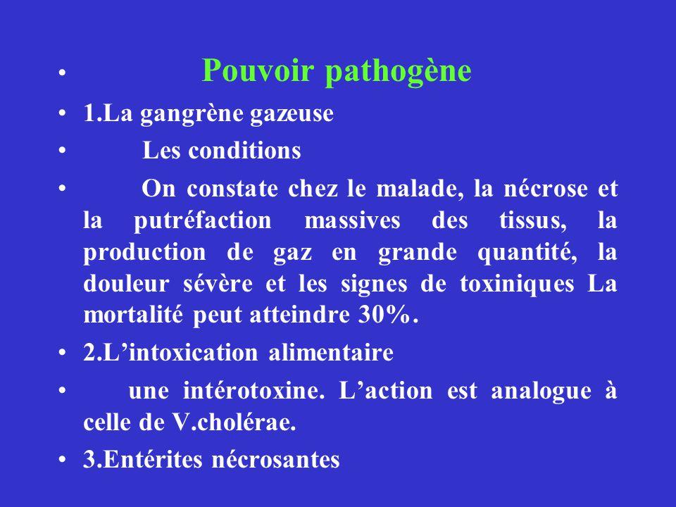 Pouvoir pathogène 1.La gangrène gazeuse Les conditions On constate chez le malade, la nécrose et la putréfaction massives des tissus, la production de