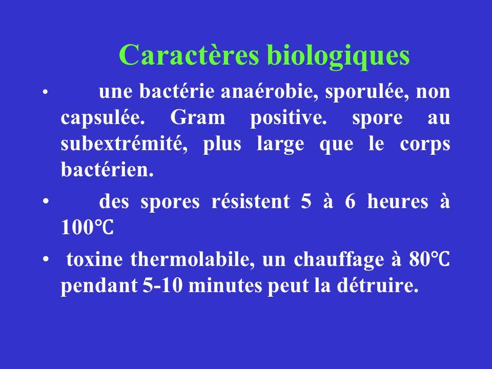Caractères biologiques une bactérie anaérobie, sporulée, non capsulée. Gram positive. spore au subextrémité, plus large que le corps bactérien. des sp