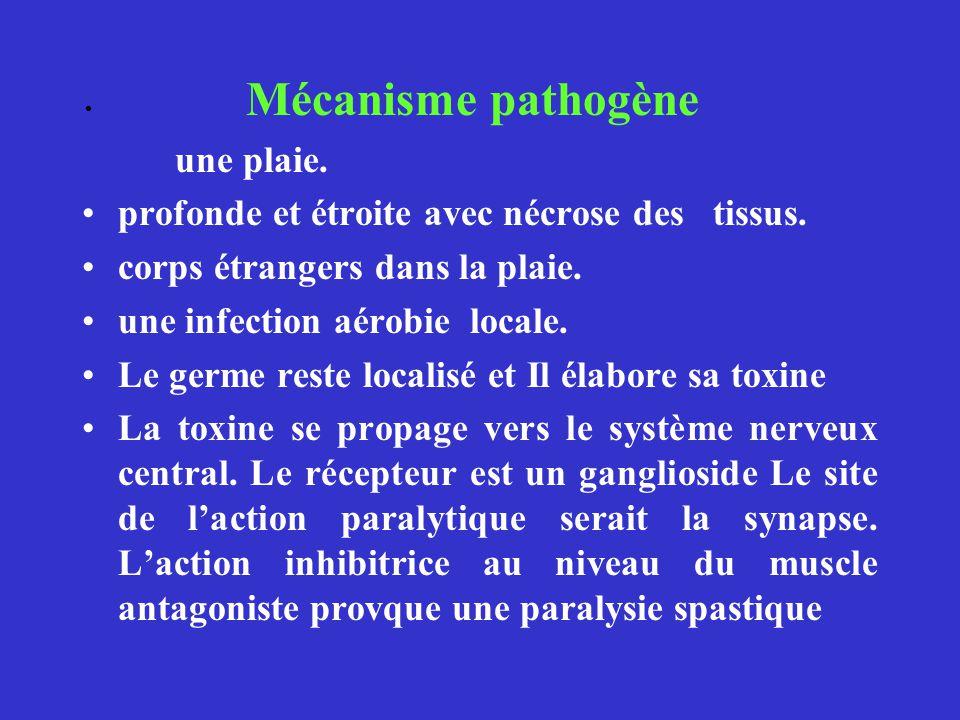 Mécanisme pathogène une plaie. profonde et étroite avec nécrose des tissus. corps étrangers dans la plaie. une infection aérobie locale. Le germe rest