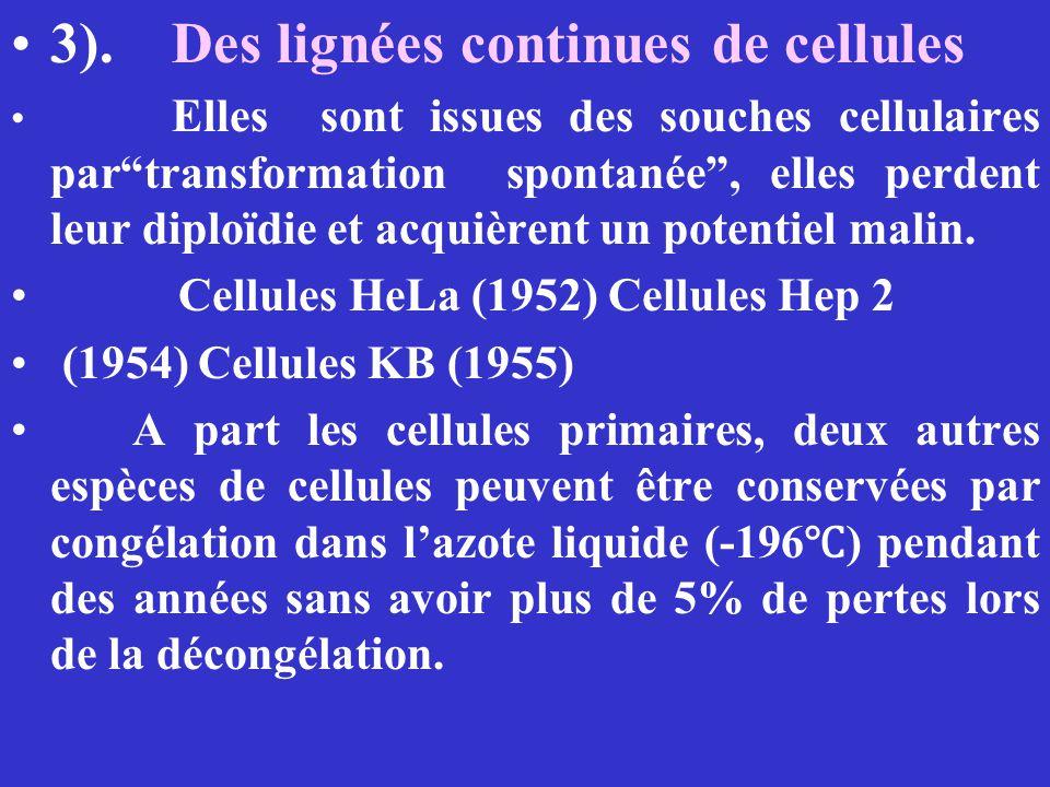 3). Des lignées continues de cellules Elles sont issues des souches cellulaires partransformation spontanée, elles perdent leur diploïdie et acquièren