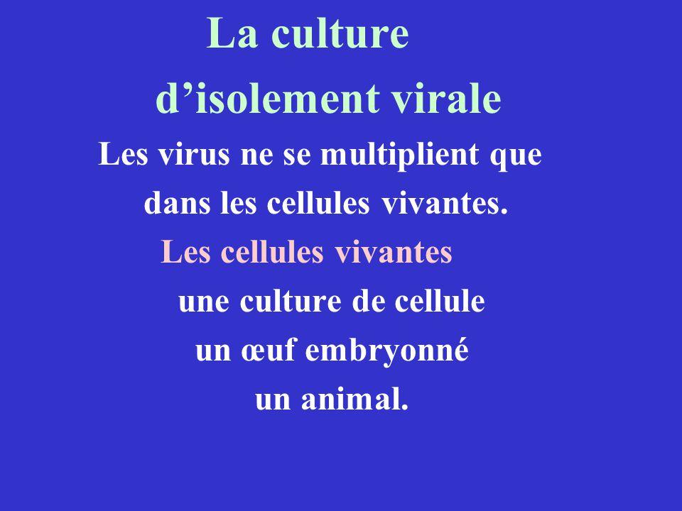 La culture disolement virale Les virus ne se multiplient que dans les cellules vivantes. Les cellules vivantes une culture de cellule un œuf embryonné
