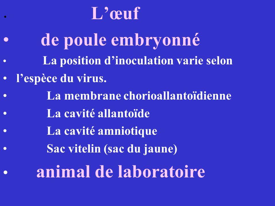 Lœuf de poule embryonné La position dinoculation varie selon lespèce du virus. La membrane chorioallantoïdienne La cavité allantoïde La cavité amnioti
