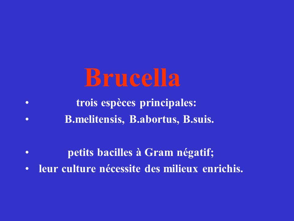 Brucella trois espèces principales: B.melitensis, B.abortus, B.suis. petits bacilles à Gram négatif; leur culture nécessite des milieux enrichis.