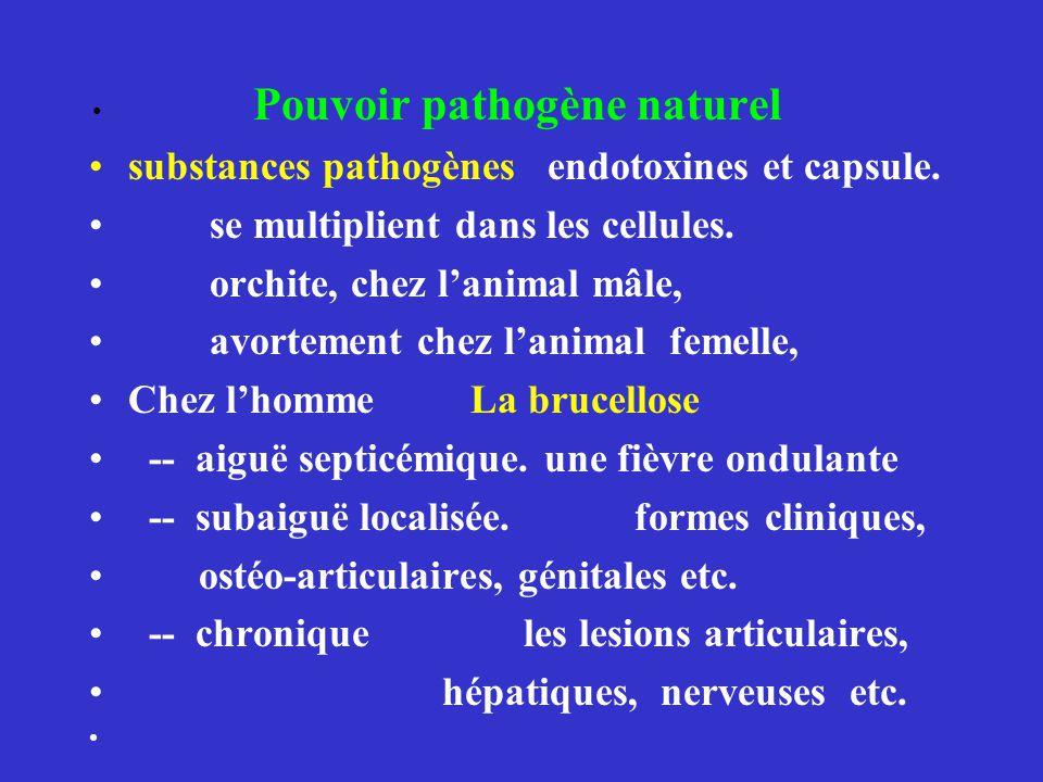 Pouvoir pathogène naturel substances pathogènes endotoxines et capsule. se multiplient dans les cellules. orchite, chez lanimal mâle, avortement chez