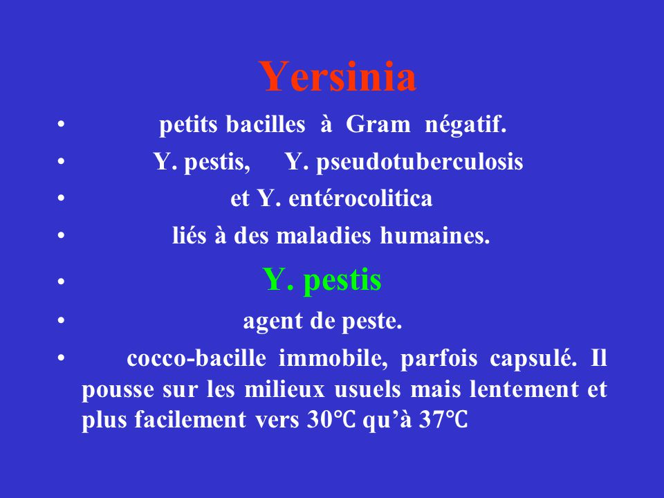 Yersinia petits bacilles à Gram négatif. Y. pestis, Y. pseudotuberculosis et Y. entérocolitica liés à des maladies humaines. Y. pestis agent de peste.