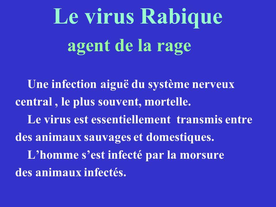 Le virus Rabique agent de la rage Une infection aiguë du système nerveux central, le plus souvent, mortelle. Le virus est essentiellement transmis ent