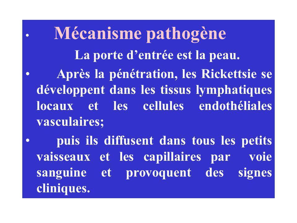Mécanisme pathogène La porte dentrée est la peau. Après la pénétration, les Rickettsie se développent dans les tissus lymphatiques locaux et les cellu