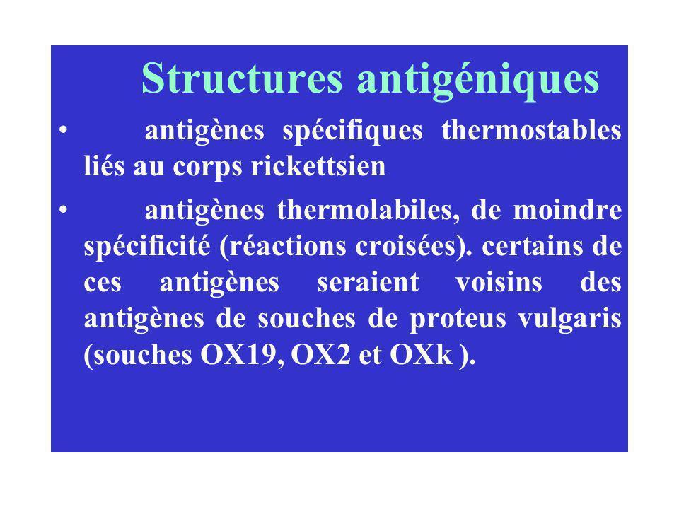Structures antigéniques antigènes spécifiques thermostables liés au corps rickettsien antigènes thermolabiles, de moindre spécificité (réactions crois