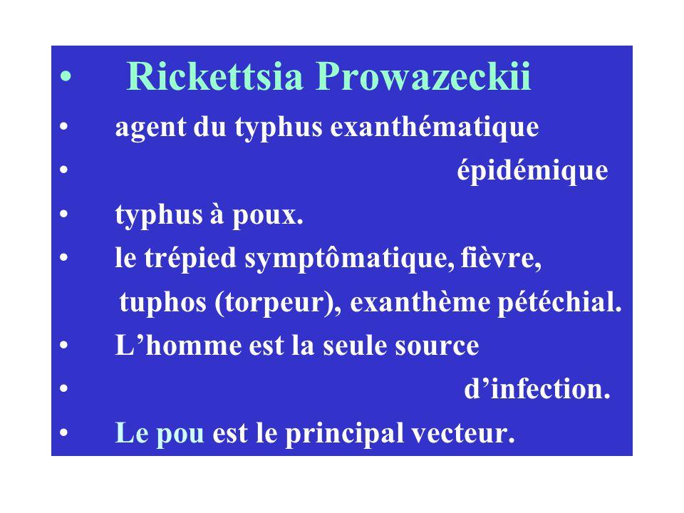 Rickettsia Prowazeckii agent du typhus exanthématique épidémique typhus à poux. le trépied symptômatique, fièvre, tuphos (torpeur), exanthème pétéchia