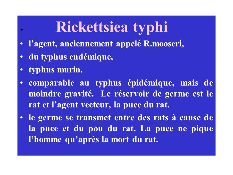 Rickettsiea typhi lagent, anciennement appelé R.mooseri, du typhus endémique, typhus murin. comparable au typhus épidémique, mais de moindre gravité.
